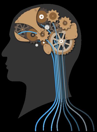 Le cerveau | Evolution Hypnose